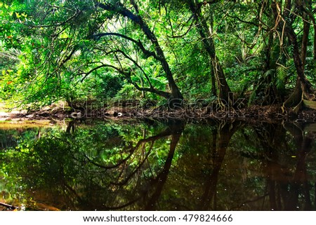 The landscape photography of the tropical forest ,the reflection of the tree in a river