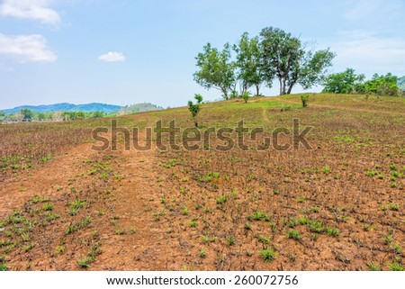 The landscape view of bald mountain or grass mountain in Ranong province, Southern Thailand