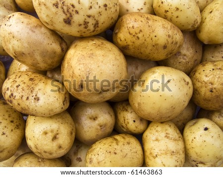 The large farm potatoes in the heap - stock photo