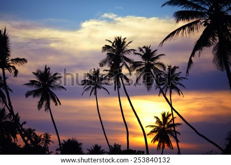 The last rays of the sun breaks through the clouds and highlights thin palms, whose silhouettes rush into the sky - stock photo