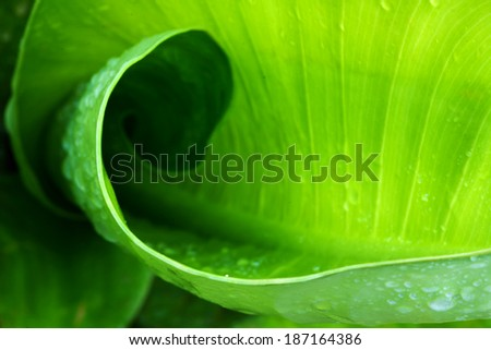 The leaf have cycle is nature texture - stock photo