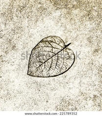 The leaf printed on street - stock photo