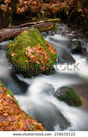 The leaves change and fall into the river in Northwestern Oregon - stock photo