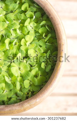 The leaves green - stock photo