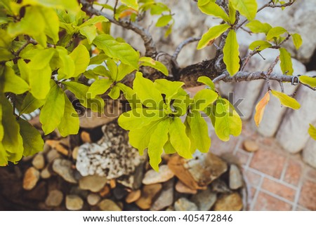 the leaves grow on the tree on a background of stones