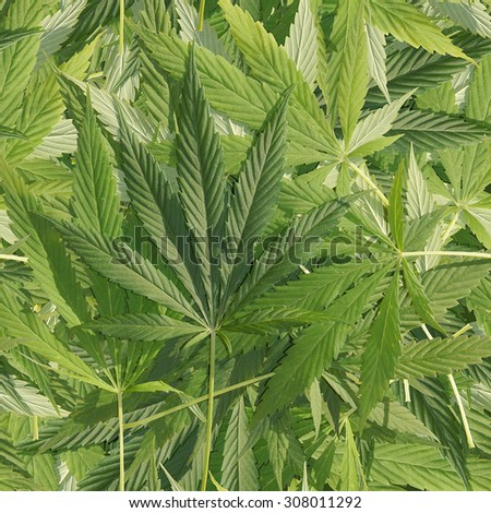 The Leaves Of Hemp. Seamless background - stock photo