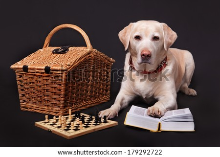 The light Labrador with chess and books plays on a black background - stock photo