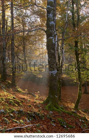 The light through the forest in autumn season