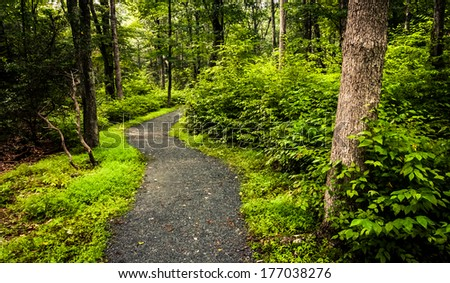 The Limberlost Trail, in a lush forest, Shenandoah National Park, Virginia.