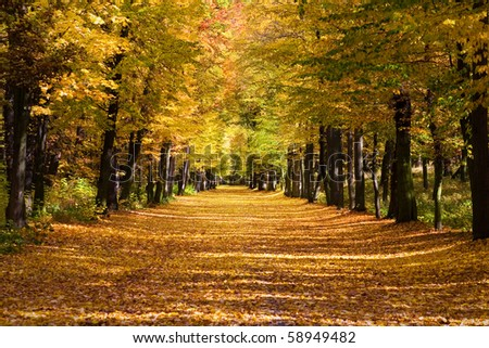 the lime alley in fall colours - stock photo