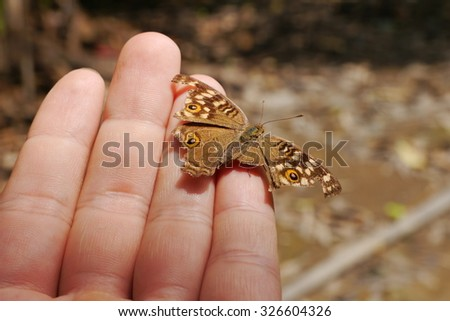 The Little butterfly  on the Hand in the big world