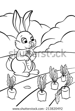 the little cute hare with carrot coloring - stock photo