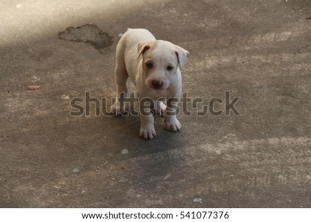 The little dog, cute, standing on the street.
