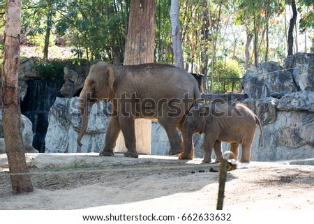 The little elephant with mother