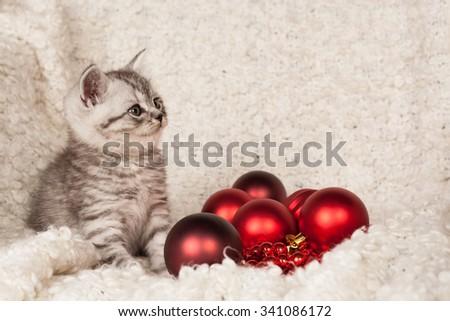 the little gray kitten plays New Year's spheres  - stock photo