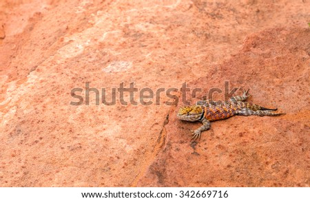 The lizard on red stones - stock photo