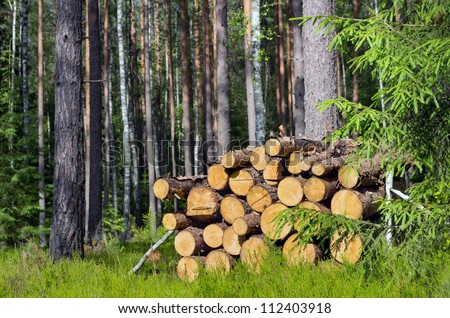 The logs laid in a stack in the wood