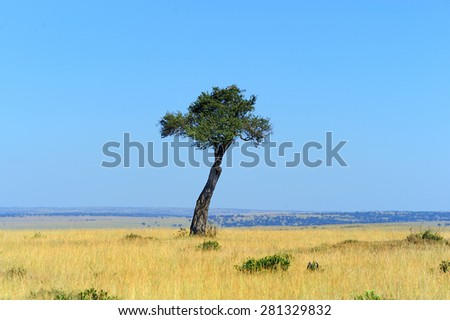 The lonely tree. National park of Kenya, Eastern Africa - stock photo