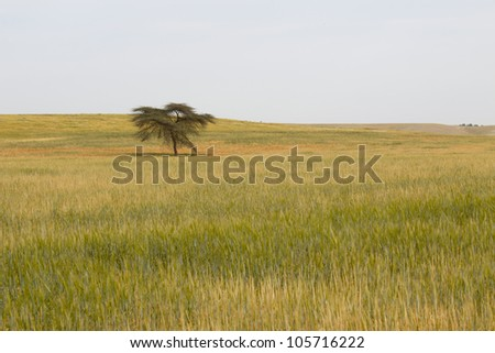 The lonely tree on a meadow of grass - stock photo