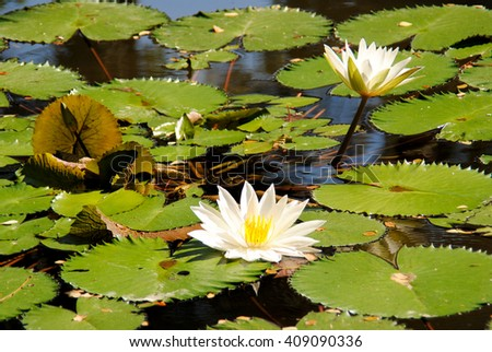 Habitat of lotus flower gallery flower decoration ideas habitat of lotus flower gallery flower decoration ideas habitat of lotus flower choice image flower decoration mightylinksfo