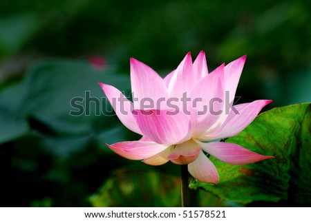 The lotus that happened in the water and flower offering.