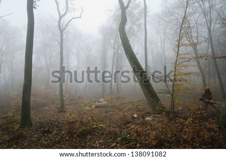the  lumberjack and the forest - stock photo
