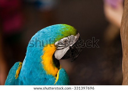 the macaw is in the cage live in the zoo. where are price of it's more expensive than other bird.