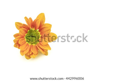The macro photo of flower on white background
