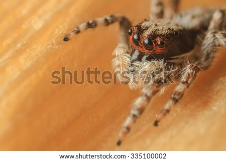 The macro photo of jumping spider