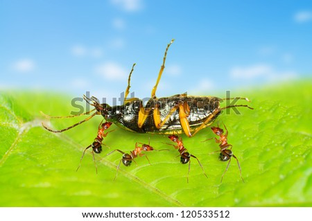 The Macro shooting ants and insects - stock photo