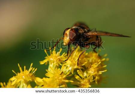 The macrophoto of a fly on a yellow flower close up