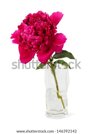 the  magnificent peony in a glass is isolated on the white