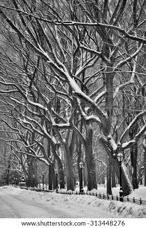 The Mall in Central Park in winter, NYC, USA - stock photo