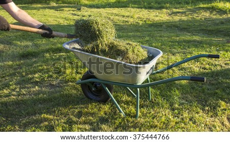 the man's hands who put the splay grass in the wheelbarrow