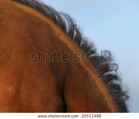 the mane of bay horse