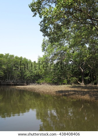 the Mangrove forest in thailand and river and fresh water with mountain and the blue sky with green leaf