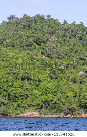 The Masoala forest in eastern Madagascar, UNESCO World Heritage - stock photo