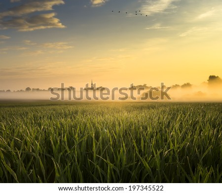 The May field in the sun and the fog - stock photo