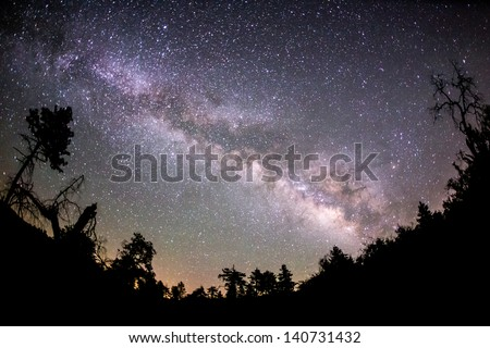 The Milky Way and some trees. In the mountains of San Diego County. - stock photo