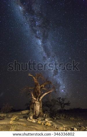 The Milkyway and Baobab Trees at Kubu Island - stock photo
