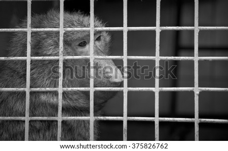 The monkey sits in a cage with sad eyes