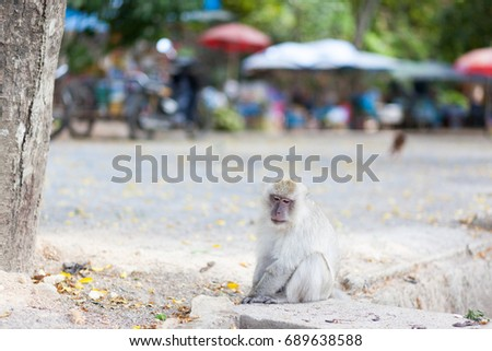 stock-photo-the-monkey-sits-on-the-aspha