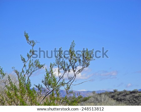 The moon is high in the sky on a winter day, over the Four Peaks in Tonto National Forest, Arizona.  - stock photo
