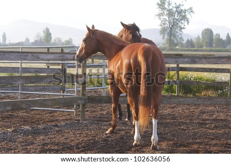 The morning sunlight helps define muscles on a young, healthy horse/A mulscular horse/A Muscular Horse - stock photo