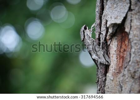 The moths climb on the tree. - stock photo