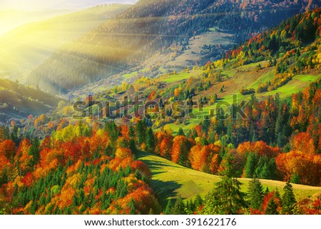 the mountain autumn landscape with colorful forest. Bright sunny weather