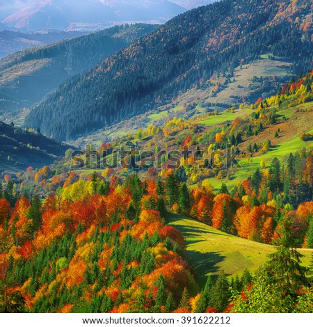 the mountain autumn landscape with colorful forest. Bright sunny weather - stock photo