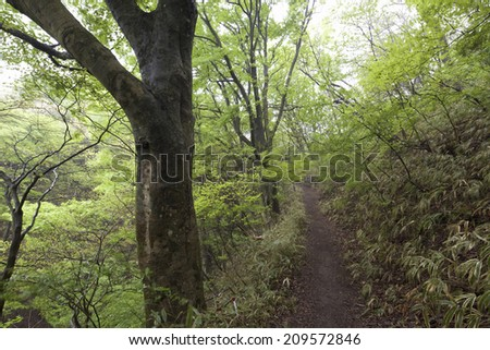 The Mountain Path Of The Beech Forest
