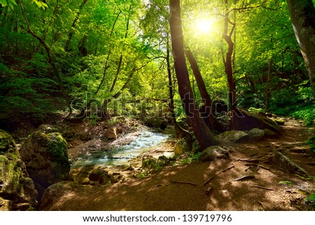The mountain river in the forest at night and sunlight - stock photo