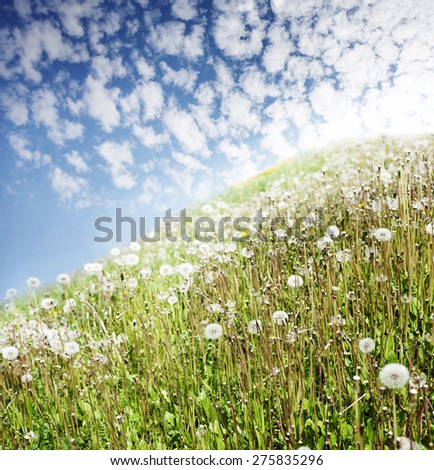 The mountain with dandelions and plumose clouds. - stock photo